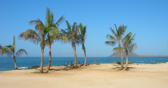 2013/11/corralejo palme mare