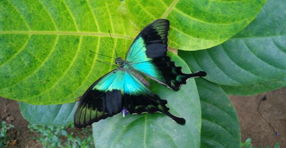 2017/03/butterfly bali